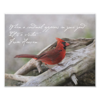 When a cardinal appears in your yard... photo print