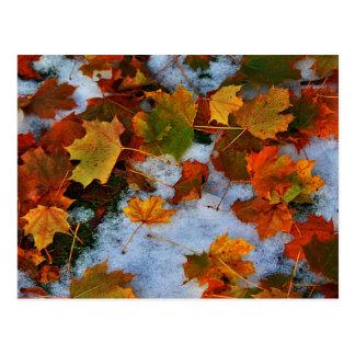 When Seasons Collide Postcard