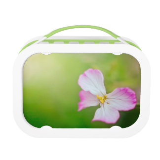 When Spirits Fly Lunch Boxes