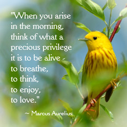 When You Arise Marcus Aurelius Inspiration Quote Poster