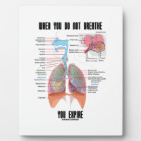 When You Do Not Breathe Expire Respiratory System Plaques