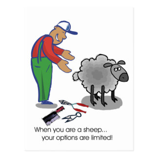 When You're a Sheep Postcard