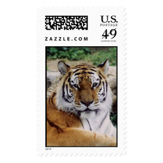 When's Lunch? Postage Stamps