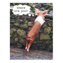 Where are You? Funny Pig Photo Postcards
