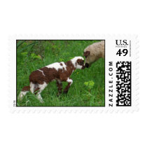 Where Ewe Been? Postage
