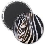 Where Is The Zebra? Fridge Magnet