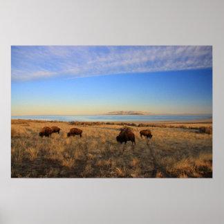 Where The Buffalo Roam Posters