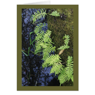 Where The Green Fern Grows Cards