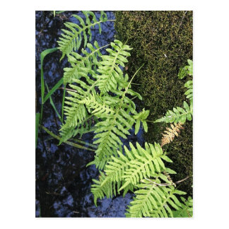 Where The Green Fern Grows Postcards
