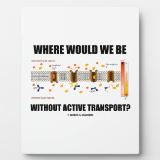 Where Would We Be Without Active Transport? Plaque