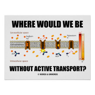 Where Would We Be Without Active Transport? Poster