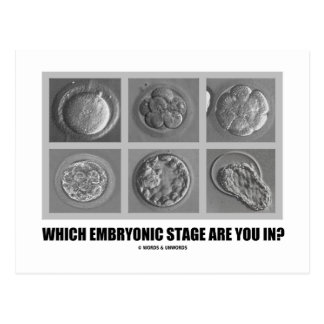 Which Embryonic Stage Are You In? (Embryos) Postcards
