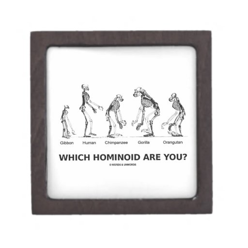 Which Hominoid Are You? (Skeletons Humor) Premium Trinket Boxes