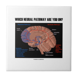 Which Neural Pathway Are You On? Brain Humor Small Square Tile