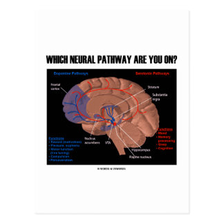Which Neural Pathway Are You On? Postcard