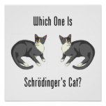 Which One Is Schrodinger's Cat? Print
