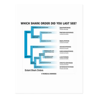Which Shark Order Did You Last See? Postcard