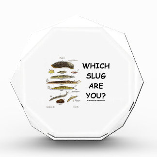 Which Slug Are You? (Different Types Of Slugs) Acrylic Award