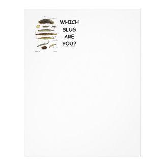 Which Slug Are You? (Different Types Of Slugs) Letterhead