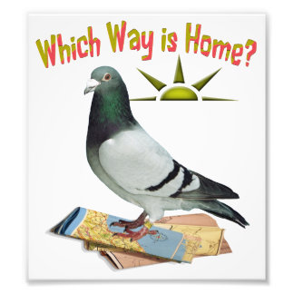 Which Way is Home? Fun Pigeon Poster Photo Print