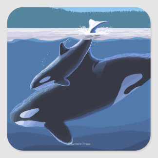 Whidbey Island, WashingtonOrca and Calf Square Sticker