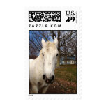 Whie Clydesdale Postage Stamp