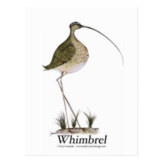 Whimbrel bird, tony fernandes postcard