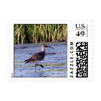 Whimbrel Postage