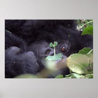 Whimsical Gorilla Poster