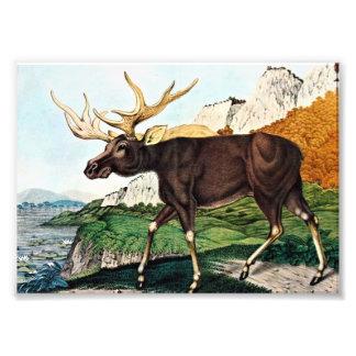 Whimsical Moose Watercolor Art Art Photo