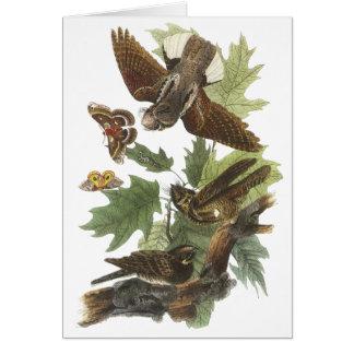Whip-poor-will, John Audubon Cards