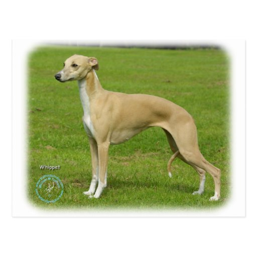 Whippet 9A002D-01 Postales
