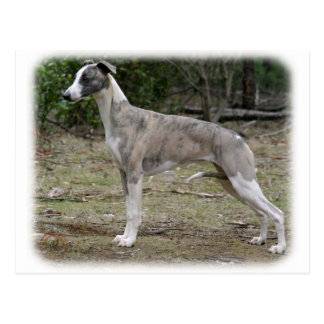 Whippet 9Y205D-224 Post Card