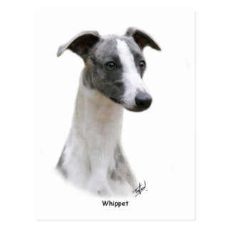 Whippet 9Y205D-231 Post Cards