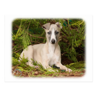 Whippet 9Y563D-005 Postcard