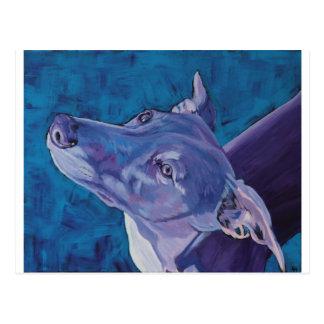 Whippet azul tarjeta postal