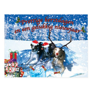 Whippet Christmas card Postcard