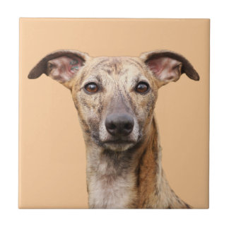 Whippet dog beautiful photo kitchen tile or trivet