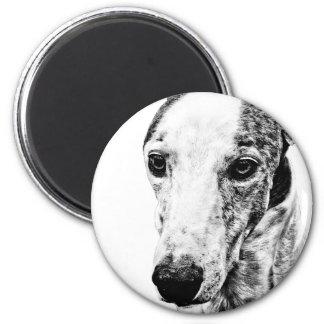 Whippet dog fridge magnet