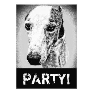 Whippet dog invites