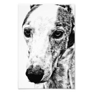 Whippet dog photo print