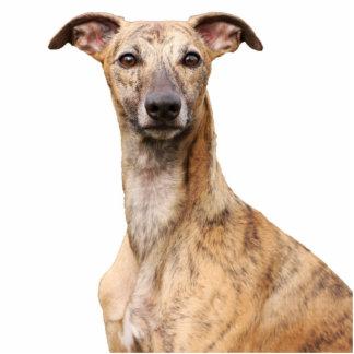 Whippet dog portrait photo sculpture, gift statuette