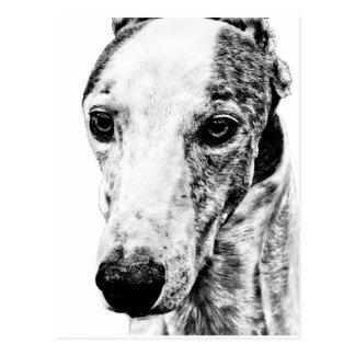 Whippet dog postcard