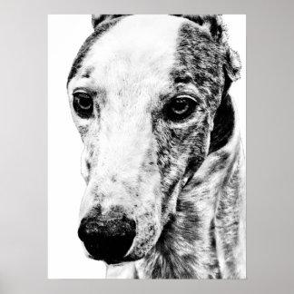 Whippet dog poster