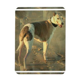 Whippet Dog Premium Magnet Flexible Magnets