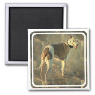 Whippet Dog Square Magnet Fridge Magnet