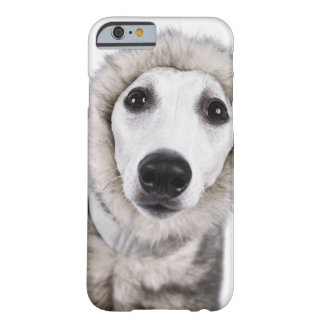 Whippet dog wearing fur coat, studio shot barely there iPhone 6 case