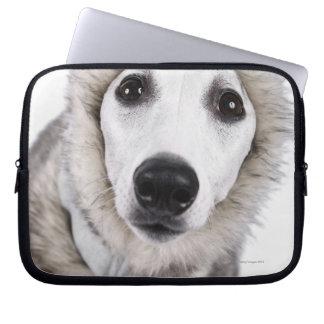 Whippet dog wearing fur coat, studio shot laptop computer sleeve