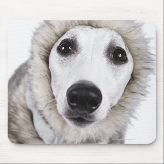 Whippet dog wearing fur coat, studio shot mouse pad