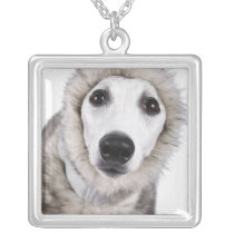 Whippet dog wearing fur coat, studio shot silver plated necklace